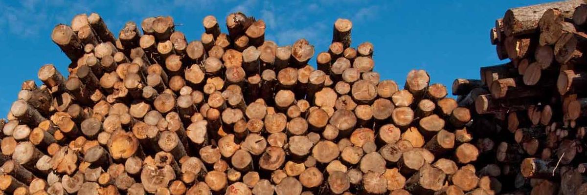 header-bosbouw1